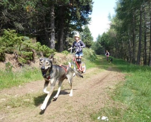 cani bike chiens de traineau
