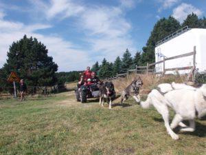 traineau a chiens en cani kart