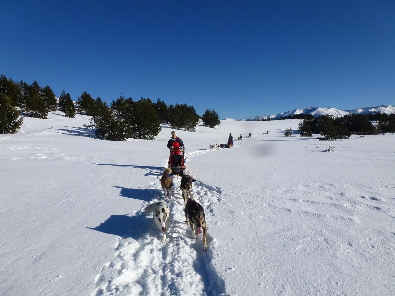 traineau a chiens randonnée en chiens de traineau à font romeu, pyrénées: conduite d'attelage
