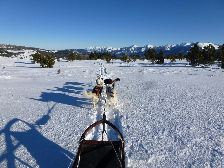 randonnée chiens de traineau à font romeu dans les pyrénées: vous conduisez votre attelage sur 1/2 journée