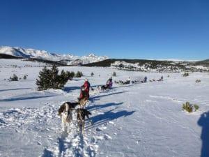 randonnée en chiens de traineau à font romeu dans les pyrénées