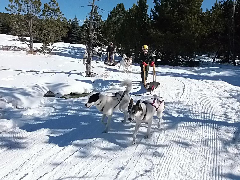 chiens de traineau pour les enfants dans les pyrénées à font romeu