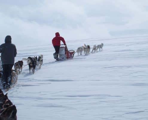 raid chiens de traineau Laponie, raid chiens de traîneau en Laponie suedoise