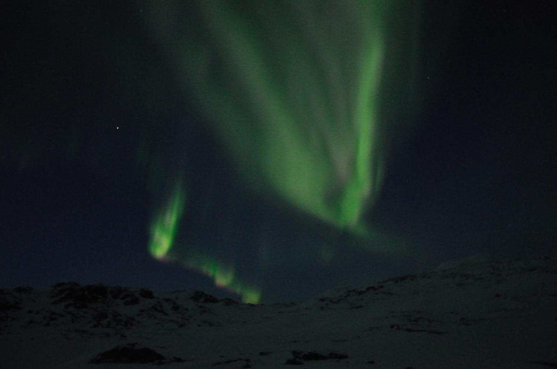 raid chiens de traineau Laponie , raid chiens de traîneau en Laponie , aurores boréalesaurore et chiens
