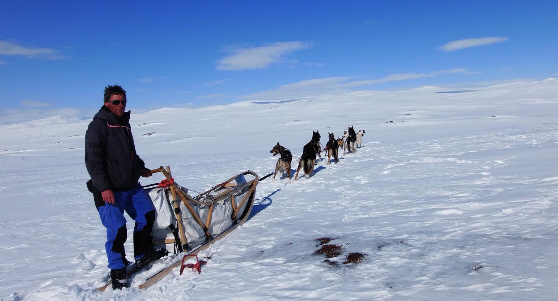 alaskan team chiens de traineau